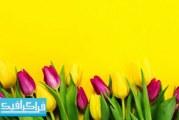 تصویر استوک گل های زیبا روی پس زمینه زرد – رایگان