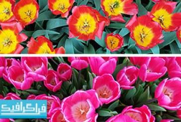 دانلود تکسچر تصاویر گل – رایگان