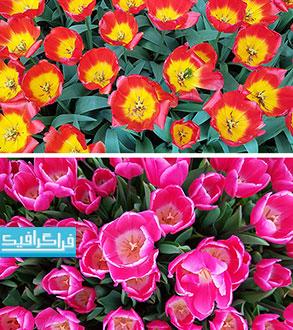 دانلود تکسچر تصاویر گل - رایگان