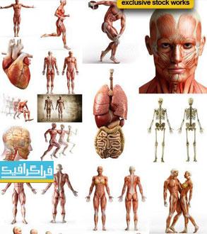دانلود تصاویر استوک آناتومی بدن انسان