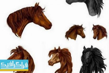 دانلود وکتور نقاشی های سر اسب
