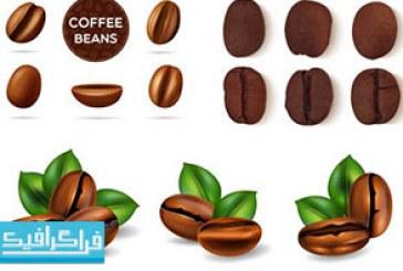 دانلود وکتور دانه قهوه واقعی – رایگان