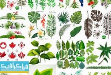 دانلود وکتور طرح های برگ گیاه و درخت – شماره 2