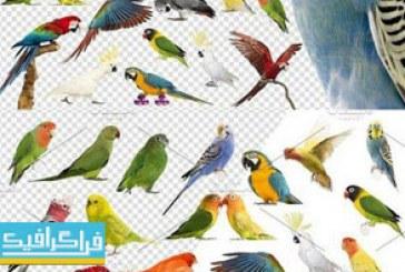 دانلود تصاویر با کیفیت پرنده – مرغ عشق و طوطی