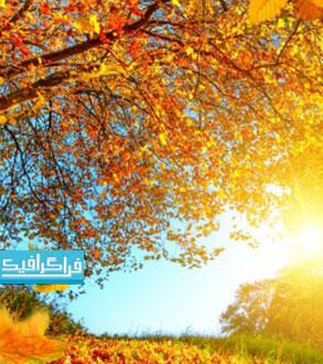 دانلود والپیپر دسکتاپ فصل پاییز - شماره 13