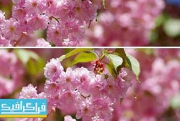 دانلود ویدیو فوتیج شکوفه ها و وزش نسیم