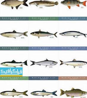 دانلود وکتور ماهی اقیانوس و دریا - Marine and Ocean Fish