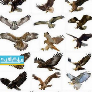 دانلود وکتور اشکال واقعی پرنده شکاری