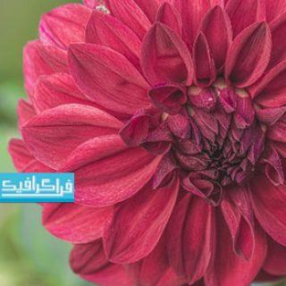 دانلود والپیپر های کیفیت 4K گل - شماره 2