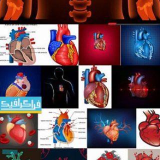 دانلود وکتور تصاویر قلب و عروق - پزشکی