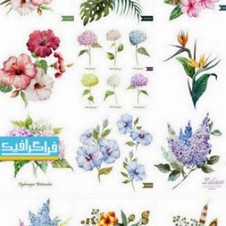 دانلود وکتور گل های ترسیمی - طرح آبرنگ