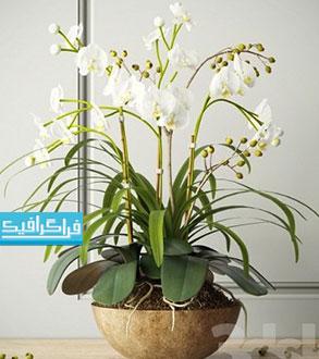 دانلود مدل سه بعدی گلدان گل ارکیده