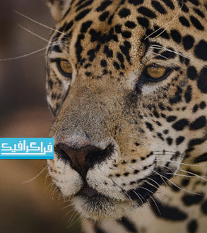 دانلود والپیپر حیوانات کیفیت 4K - شماره 12
