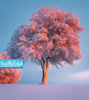 دانلود والپیپر زمستان درخت برفی