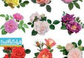 دانلود وکتور های گل رز - Rose Flowers Vector