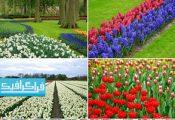 دانلود تصاویر استوک گل های لاله و سنبل
